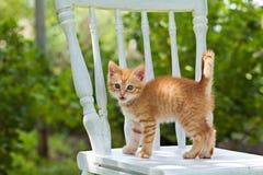 Neugieriges kleines rotes Kätzchen Stockbild