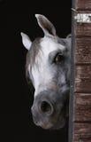 Neugieriges Pferd Lizenzfreies Stockfoto