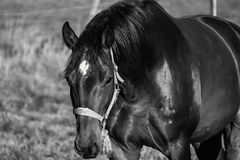 Neugieriges Pferd Lizenzfreie Stockfotos