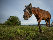 Neugieriges Pferd Stockbild