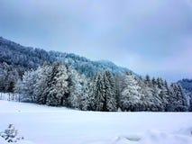 neukirchen лес Стоковое Изображение