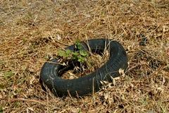 Neumático del pedazo en un campo Foto de archivo