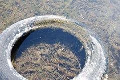 Neumático viejo en el agua Imagen de archivo libre de regalías