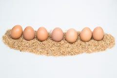Neun Eier mit Hülsen Lizenzfreie Stockfotografie