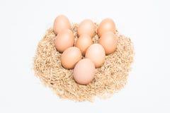Neun Eier mit Hülsen Stockbild