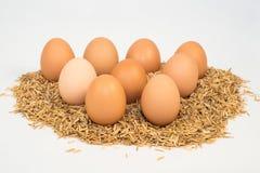 Neun Eier mit Hülsen Stockfoto