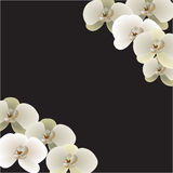 Neun Orchideenblumen Lizenzfreies Stockbild