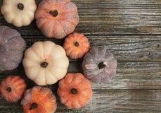 Neun rustikale gealterte diffent Farben der Kürbise auf einem rustikalen hölzernen Hintergrund lizenzfreies stockfoto