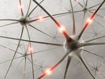 Neurônios Fotos de Stock Royalty Free