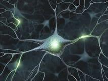 Neurônios Fotografia de Stock Royalty Free