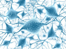 Neurônios Imagens de Stock Royalty Free