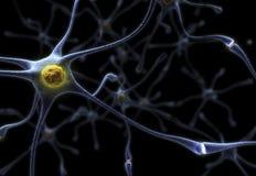 Neurônios Imagem de Stock Royalty Free