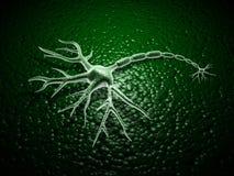 Neurônio Fotografia de Stock