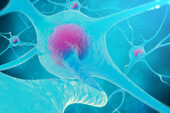 Neural network, brain cells, nervous system. 3d illustration Stock Photos