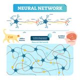 Neural network vector illustration. Neuron structure and net diagram. Synapse, soma, axon and dendrites location. Human and cat neuron count comparement vector illustration