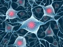 Neurônios e núcleo Foto de Stock Royalty Free