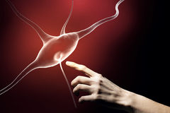 Neurology study Royalty Free Stock Photography