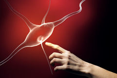 Neurology study concept Royalty Free Stock Photo