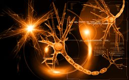 Neuron Royalty Free Stock Photos