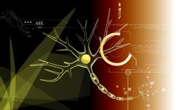 Neuron Royalty Free Stock Image
