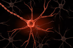 Neuron Royalty Free Stock Photography