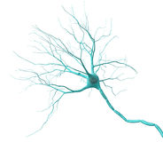 Neuron. 3D render of neuron on a white background Royalty Free Stock Photography