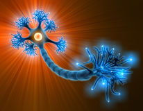 Neuron. With complete structure for transmission of cellular signals Royalty Free Stock Images