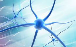 Neuron Stock Photos
