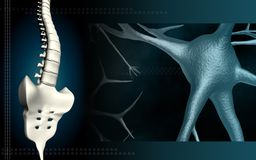 Neuron and backbone Stock Photo