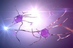 Neuron brain cell, neural network. 3D illustration. Human nervous system Royalty Free Stock Photos
