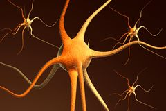 Neuron brain cells Royalty Free Stock Images