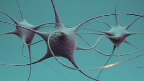 Neuron cluster signal transfer inside brain