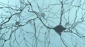 Neuron cluster signal transfer inside human brain