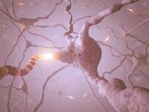 Neuron Concept Stock Image