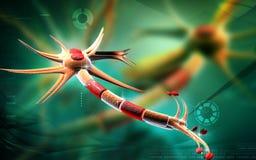 Neuron Stock Photos
