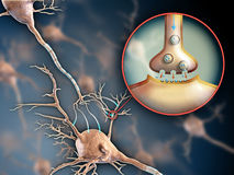 Neuron synapse Royalty Free Stock Photo