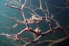 Neuron tree. Underwater tree looks like human neuron Royalty Free Stock Photos