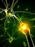 Neurona activa Fotografía de archivo libre de regalías