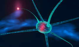 Neuronal cell Stock Photo