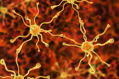 Neuronal synapses, brain cells Stock Image