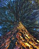 Neuronal träd royaltyfria bilder