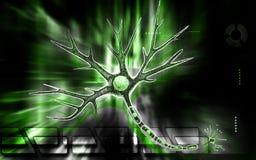 Neurone Fotografia Stock
