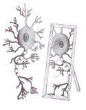 Neurone dello specchio Immagini Stock Libere da Diritti