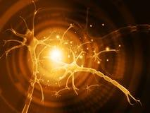 Neurone umano illustrazione vettoriale