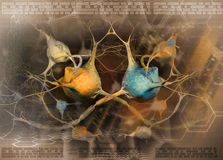 Neuronen en zenuwstelsel - abstracte achtergrond royalty-vrije illustratie