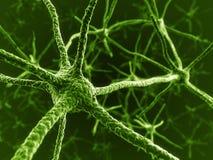Neuronen in groen Royalty-vrije Stock Afbeelding