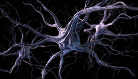 Neurones Royalty Free Stock Photo