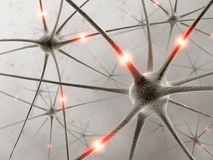 Neurons. Some hardwired neurons, transferring pulses and generating information Royalty Free Stock Photos
