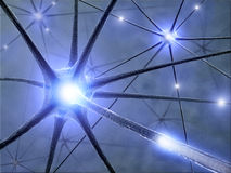 Neurons. Some hardwired neurons, transferring pulses and generating information Royalty Free Stock Photo