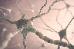 Neurons Royaltyfri Foto